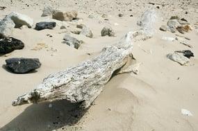 Driftwood and rocks on sandy beach