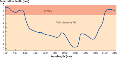 Wavelengths ideal for absorption