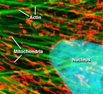 Multi-Color Fluorescence Image