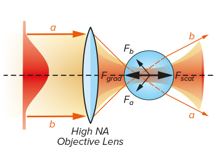 Forces Experienced by glass by an optically transparent sphere.